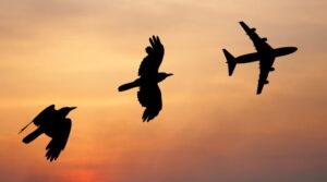 Lotnictwo bezpieczne z PZU