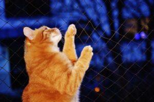 Tresura kota – jak robić to dobrze?