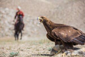 Kirgistan – niezwykłe polowania z orłami