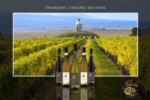 Czeskie wina, które warto spróbować