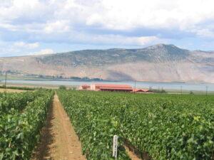 Zaglądamy do Grecji, czyli lektura z lampką wina Alpha Estate