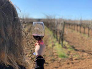 Modne wina z hiszpańskiej Katalonii
