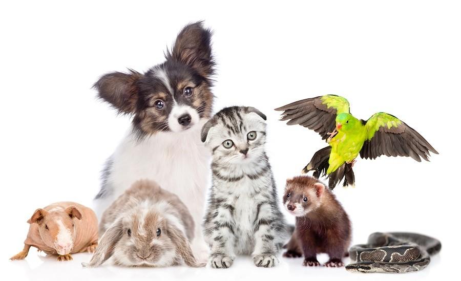 kupić dziecku zwierzątko