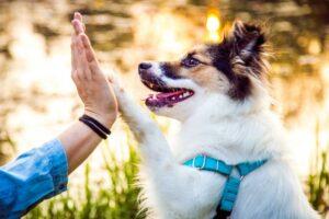 Czy pies może pomóc naszemu zdrowiu? Pewnie, że tak!