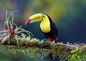 Kostaryka – tropikalny raj w Ameryce Środkowej